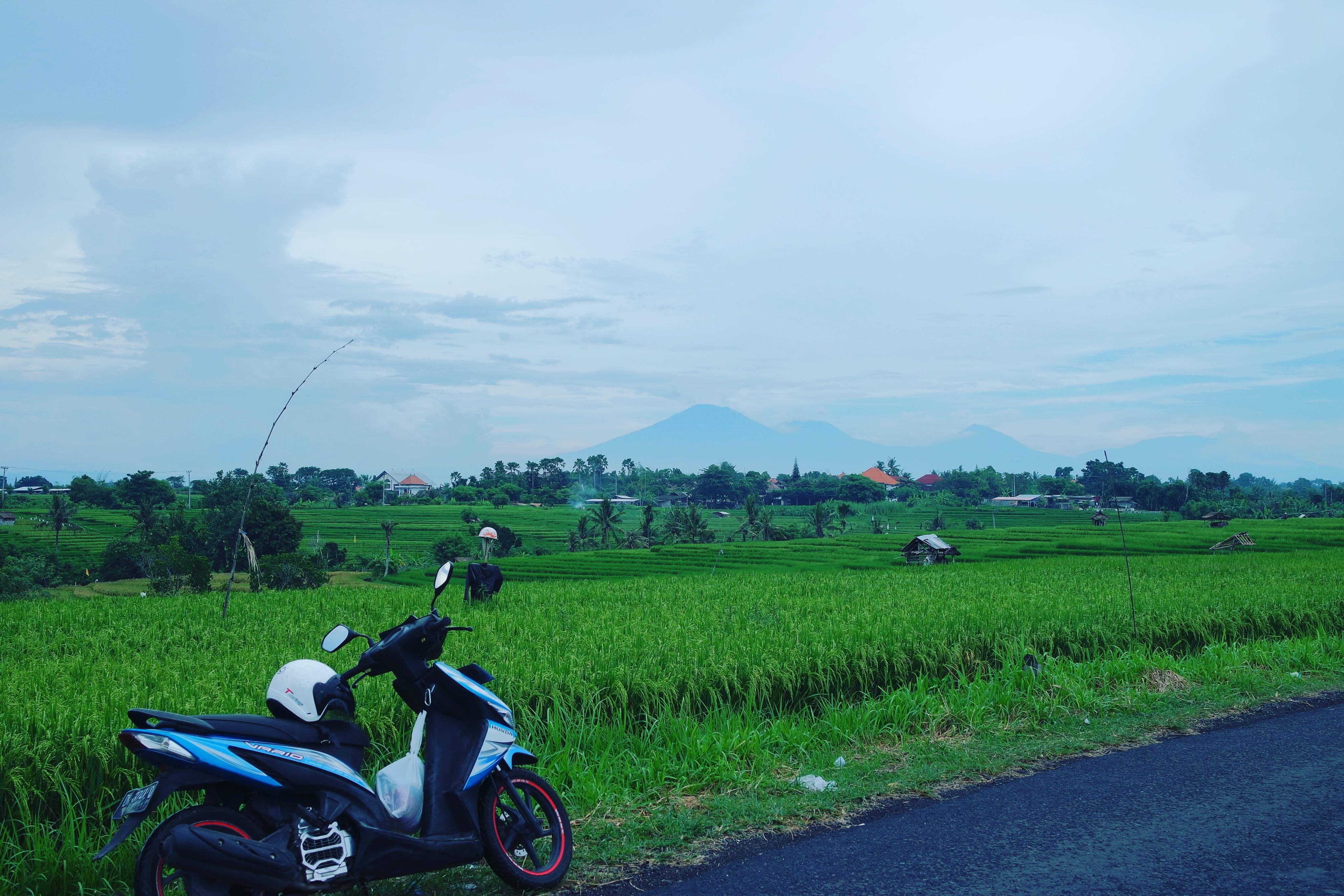 Canggu Bali Ricefields